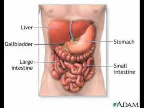 how long does digestion take in small intestine picture 5