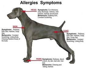 dog skin allegies picture 3