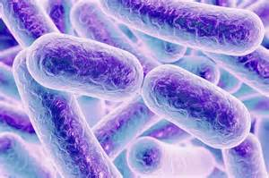 bacterial colitis picture 11
