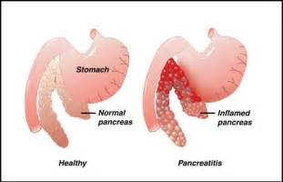 canine diet pancreais picture 14