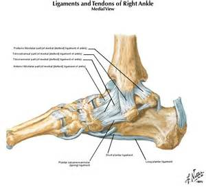joint capsular sprain foot picture 17