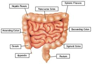 colon diagram picture 1