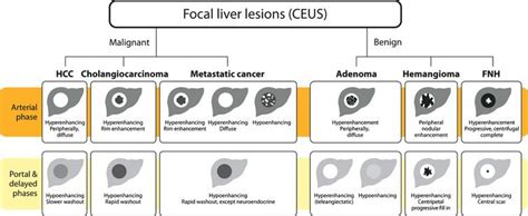 colon cancer and focal lesions in liver picture 11