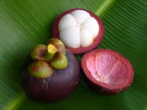 xanthones from garcinia mangostana ( guttifer ) picture 3