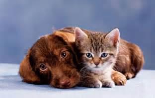 cat skin diseases picture 15