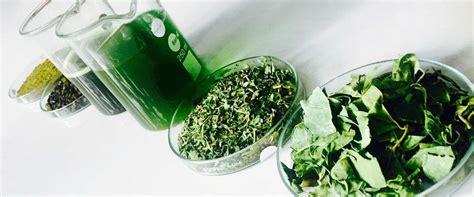 herbal extractors picture 5