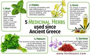 herbal medicines and their cures picture 6
