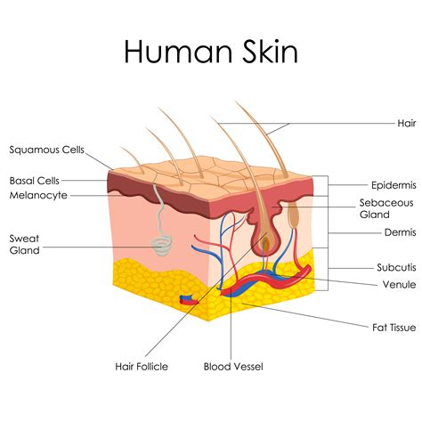skin care product called root 5 picture 4