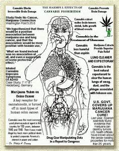 bungle weed effects on the body picture 12