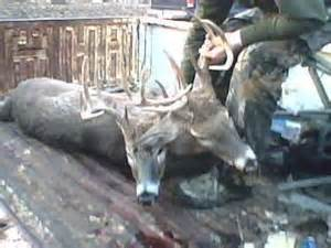 deer antler spray makes penis bigger picture 7