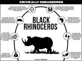 african rhino diet picture 13