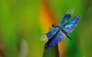 biddy dragonfly diet picture 5