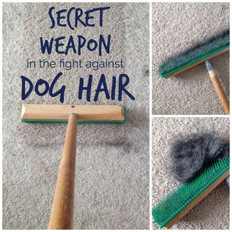 best vaccum cleaner for remove pet hair picture 3