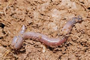worm formicophilia picture 7