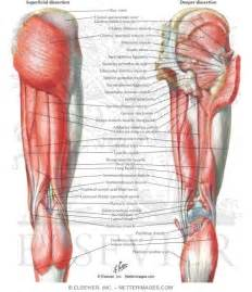cartillage of the hip joint picture 17