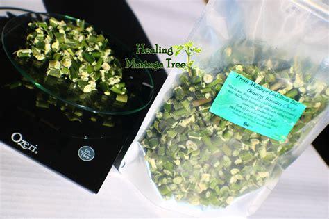 hw do one locally use herbs like moringa picture 9