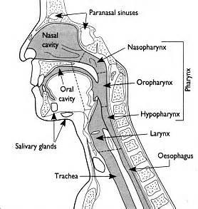 human papilloma virus picture 11
