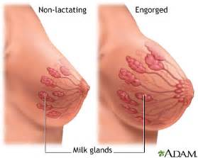 extreme breast expansion and milk production picture 1