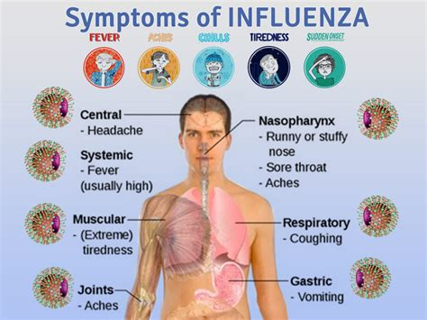 flu symptoms with gastrointestinal symptoms picture 1