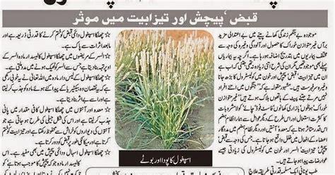 cholesterol in urdu picture 3