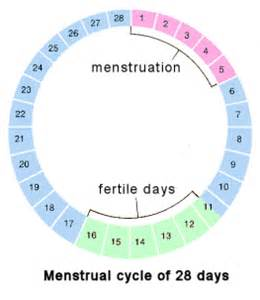 how does thyroid hormone affect the menstrual cycle picture 9