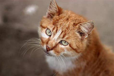 cat herbal sedation picture 19