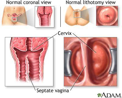 gambar penis masuk vagina picture 2