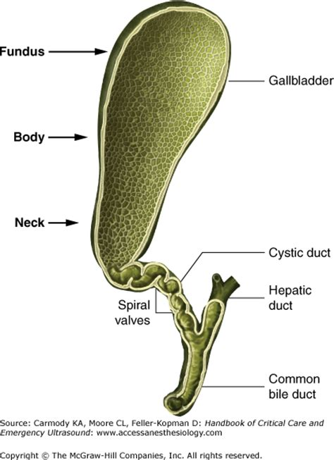 neck pain and gallbladder picture 2
