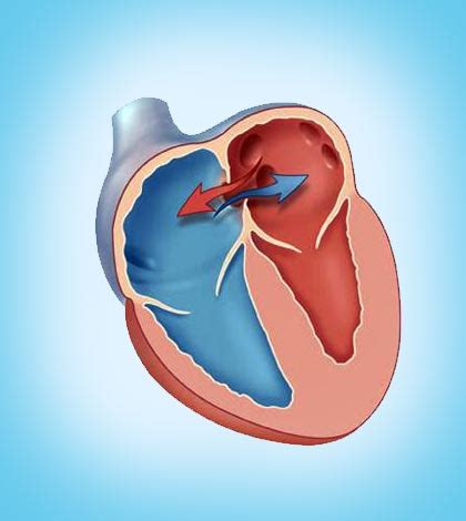 blood flow to and from the heart picture 6