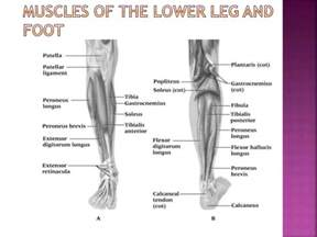 joint and leg pain picture 10
