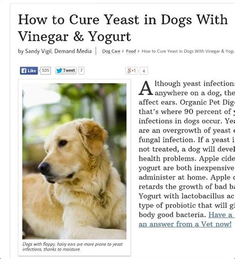 peroxide for relief of canine yeast infection picture 5