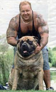 picture of mastiff big penis picture 11