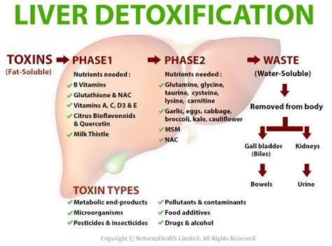 can a liver detoxifier help with libido picture 3