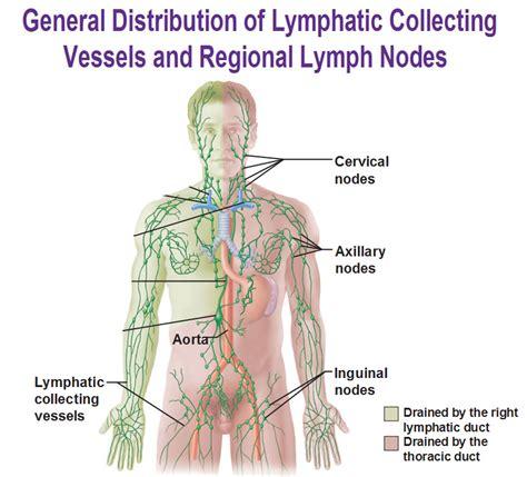 calcium in axillary lymph node and autoimmune disease picture 5