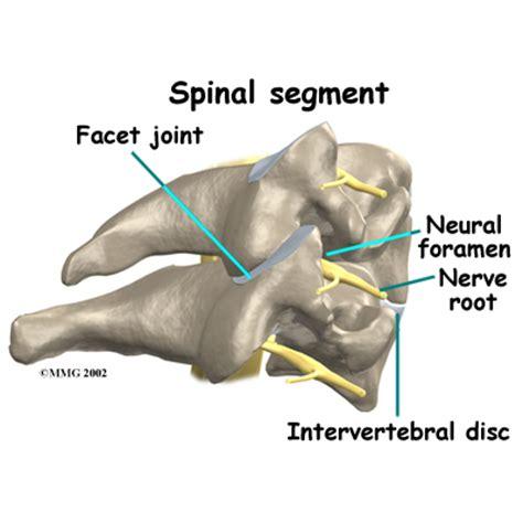 facet joint nerve eblasion picture 9