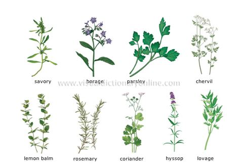 herbal plants picture 3
