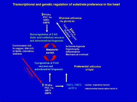 pagkain iwas cholesterol picture 9