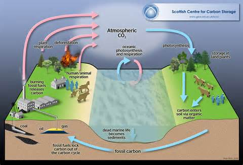 role of water in microbial growth picture 13