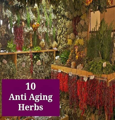 ageing herbs picture 5