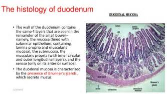 duodenum stomach colon picture 14