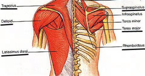 info on pull muscle picture 11