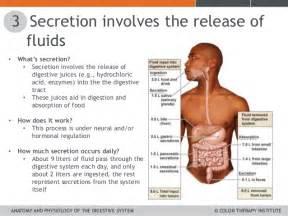 digestive fluids picture 10