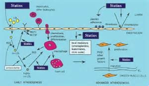 Cholesterol zocor picture 6
