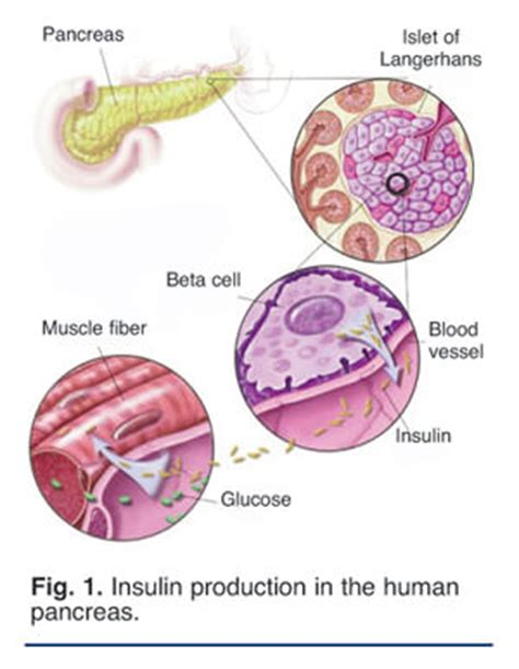causes of bladder cancer in mice picture 10