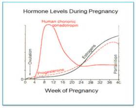 hgh hormone levels pregnancy picture 1
