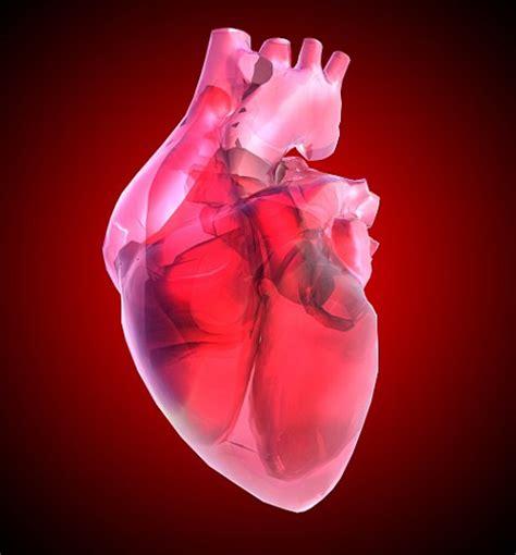 carditis picture 1