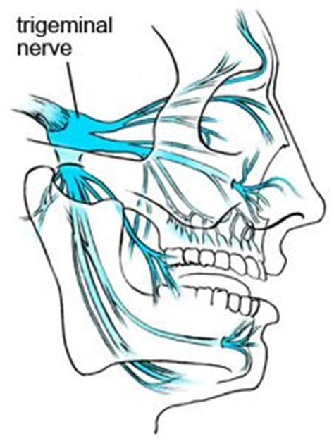 trigeminal pain ciliary muscle picture 13