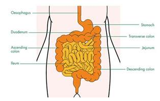 large and small bowel picture 2