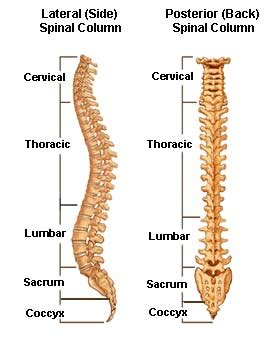 bilateral degenerative joint disease picture 15