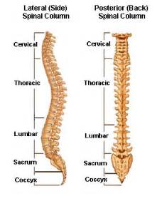 facet joint replacement picture 10